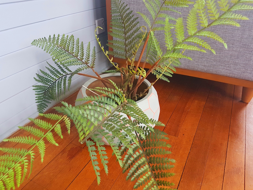 Ferns in pot.