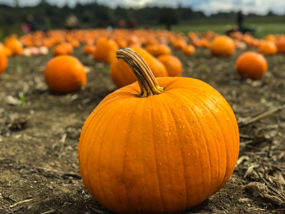 Pumpkin Picking autumn half-term