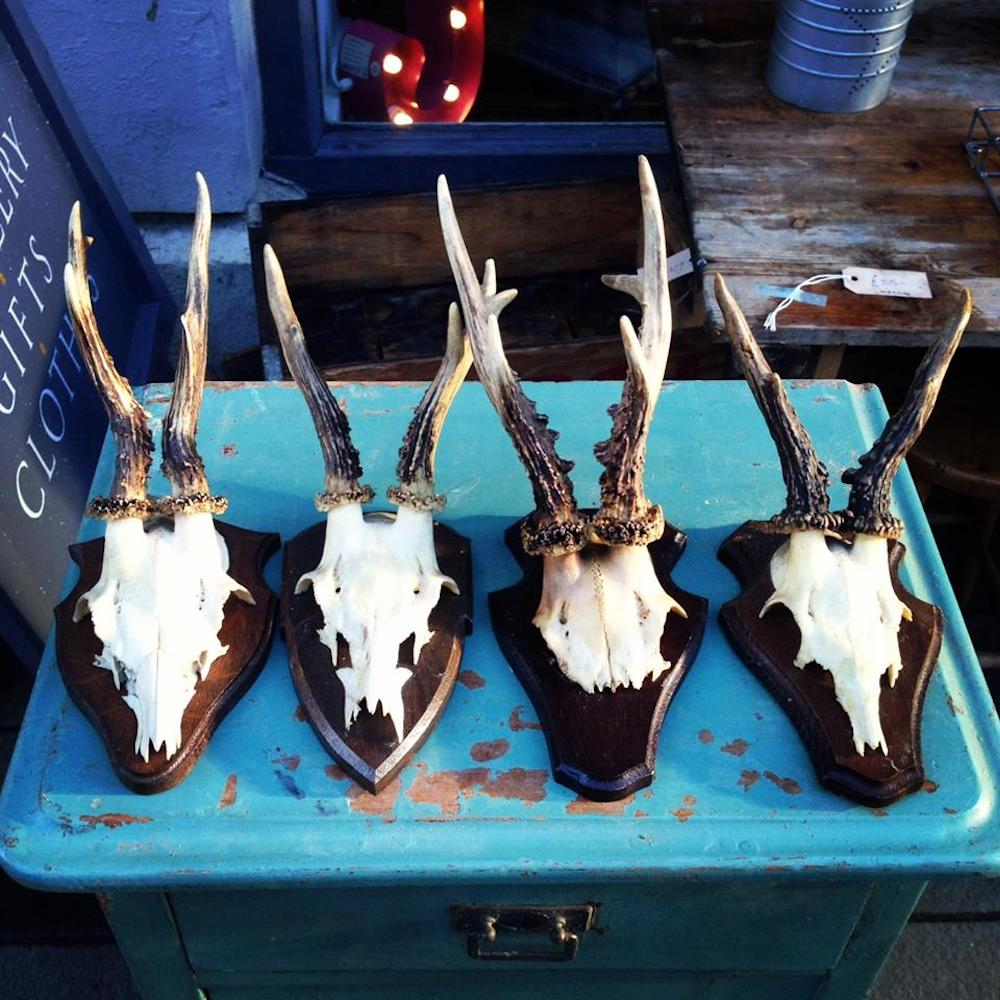 Vintage antlers romsey winchester consortium
