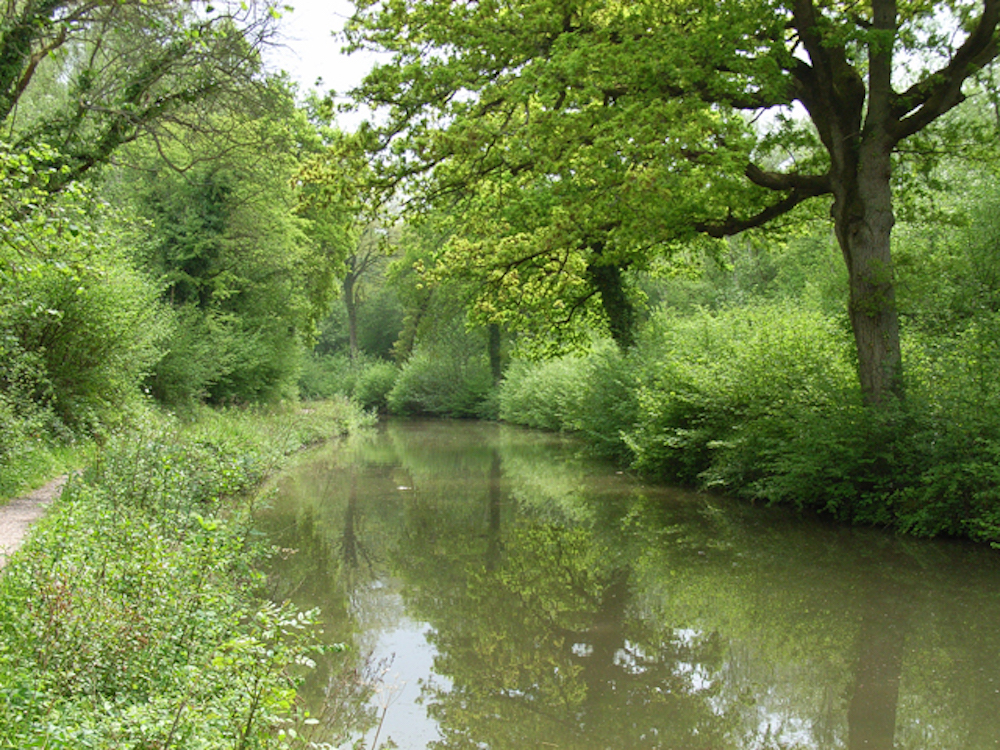 Basingstoke Canal - Andrew Smith