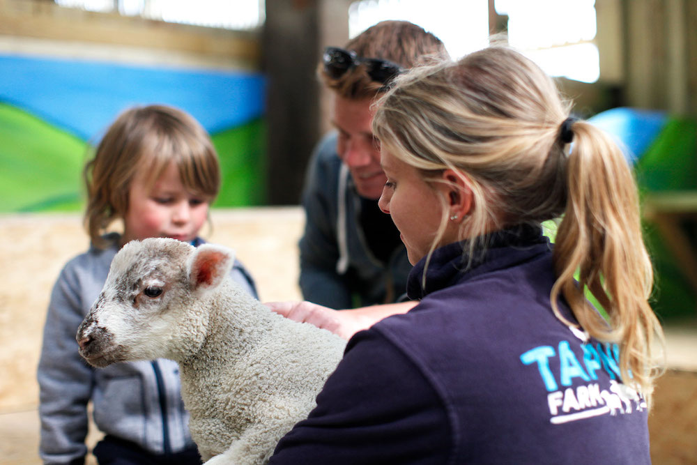 Tapnell Farm Park - Easter - Lambs