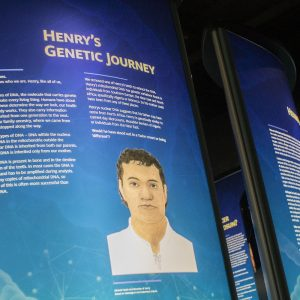 Henry's genetic journey The Mary Rose Trust