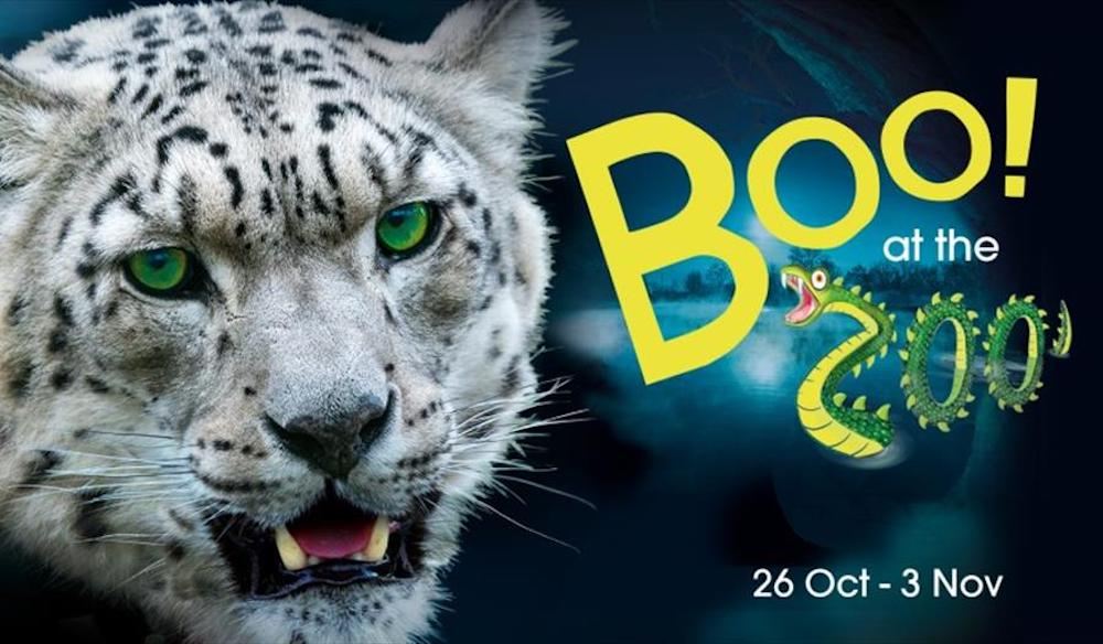 Marwell Boo at the Zoo poster