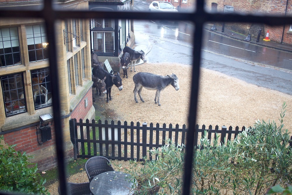 Soggy Donkeys at the montagu arms