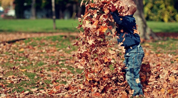 boy throwing leaves for half term activities autumn halloween