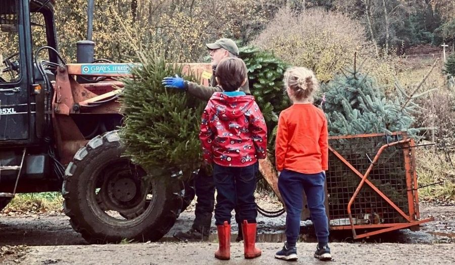 Wyldes Farm Christmas Trees