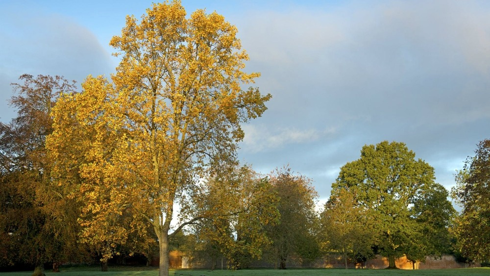 Mottisfont Autumn