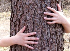 Kids hands hugging tree