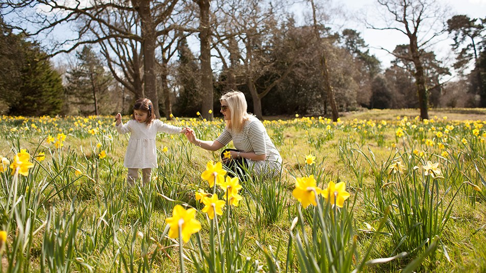 Exbury Gardens New Forest Spring daffodils meadow family Easter days out