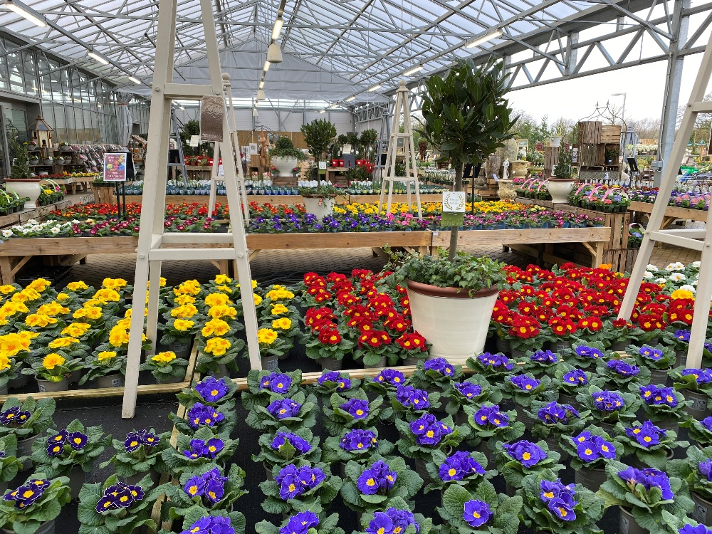 Rosebourne Garden Centre Bedding plants