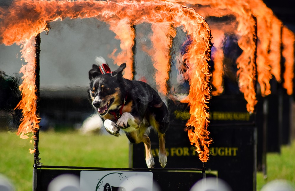 Dogstival dog flames