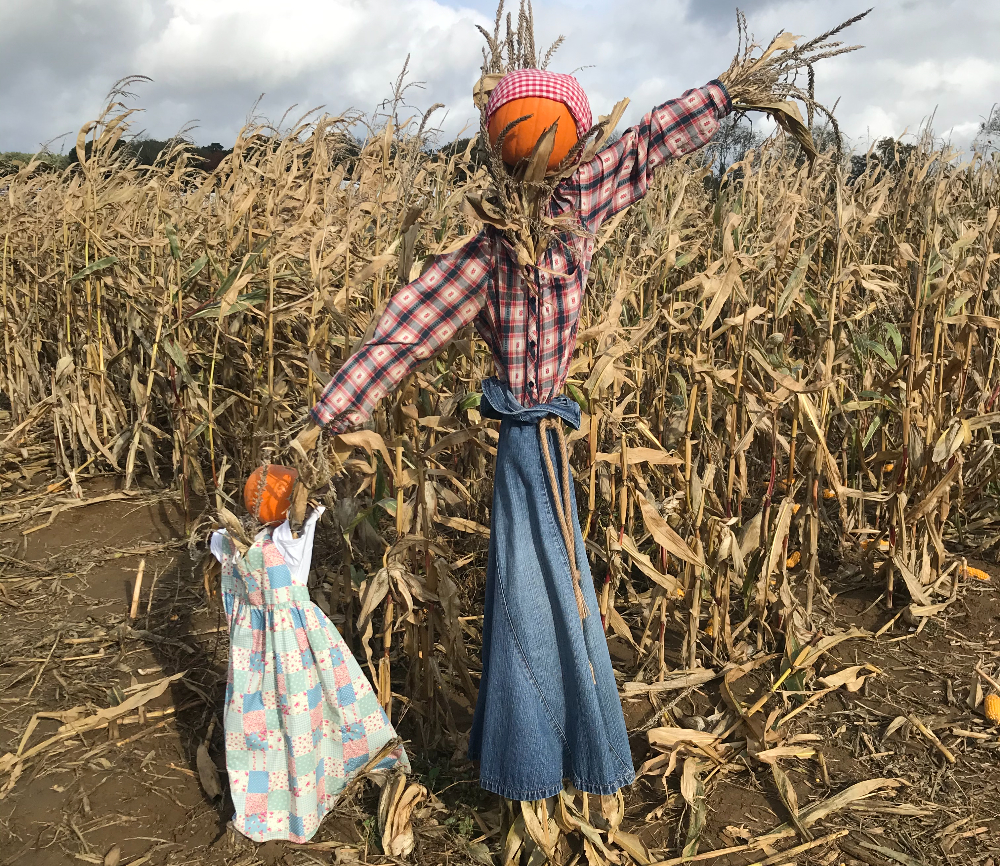 Rogate Pumpkin Patch Hampshire Halloween What's on October kids